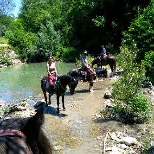 Horse riding in Alto Monferrato